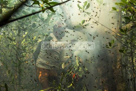 Honey Hunting in Sundarbans