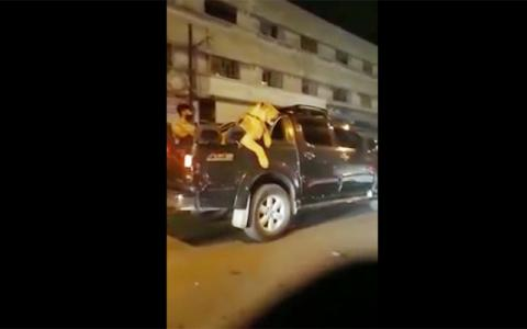 Karachi man caught after driving with lion