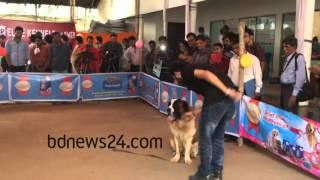 Pet dog exhibition in Dhaka